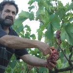 Vine harvest and wine juice in Greece